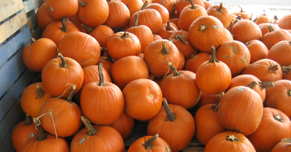 4 Fun Facts About Pumpkins You're Sure to Love