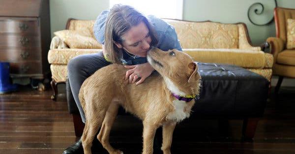 Animal Adoptions Increase Significantly During Coronavirus Pandemic