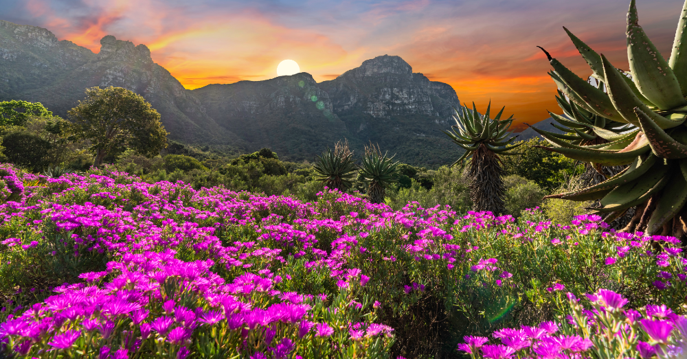 Five Beautiful Flower Fields to Visit in the World